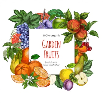 Square garden fruits banner template