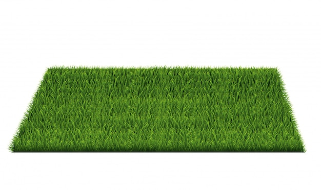 Square of green grass field