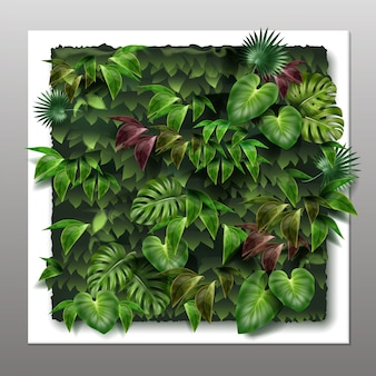 Square vertical garden or green wall with tropical green leaves