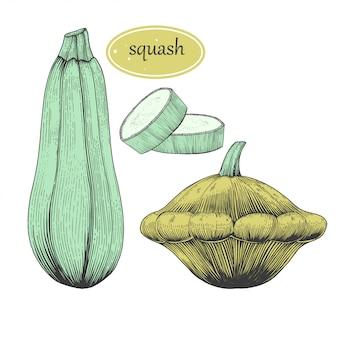 Набор для рисования сквош. изолированный объект нарисованный рукой с отрезанной частью и семенами. овощной гравированный стиль иллюстрации. Premium векторы
