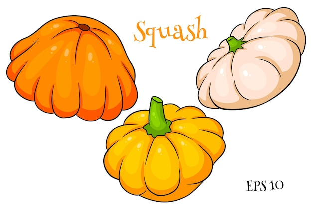Squash set. fresh squash yellow, orange and beige. in a cartoon style. vector illustration for design and decoration.