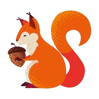 Squirrel acorn animal