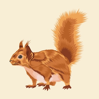 Squirrel animal vector