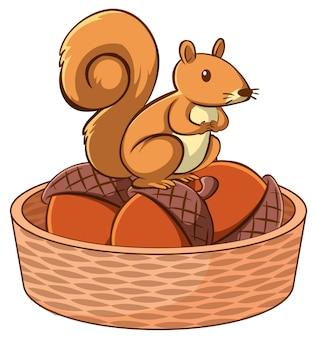 Squirrel in basket