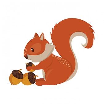 Squirrel eating nut cartoon animal