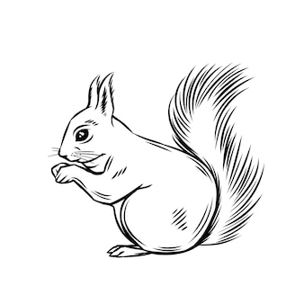 Squirrel forest animal. wild rodent ink illustration.