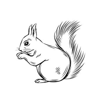 Белка лесное животное. иллюстрация чернил диких грызунов.