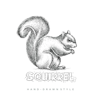 Squirrel hand drawn style, animal illustration looks realistic, black and white abstract