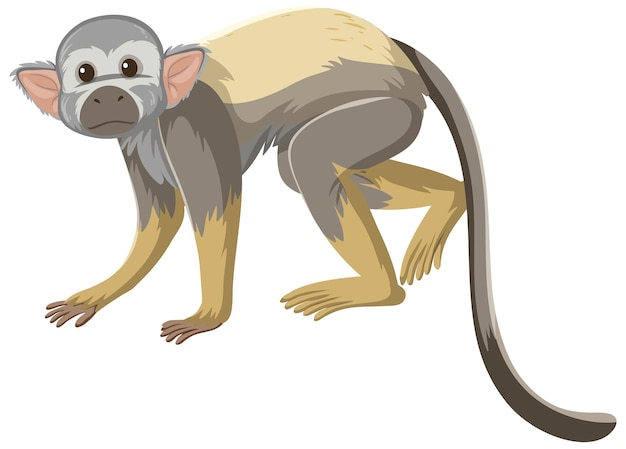 Squirrel monkey cartoon character isolated on white background