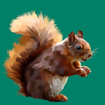 Squirrel on pop art vector illustration