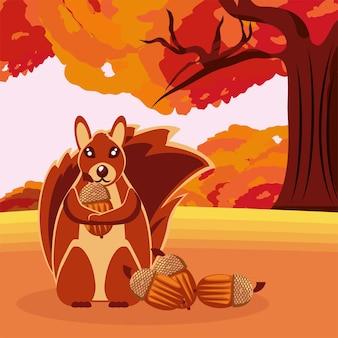 도토리와 마른 잎이 있는 다람쥐