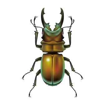 Stag beetle vector design illustration template
