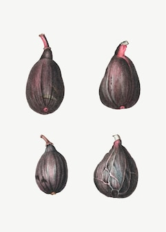 Stages of a fig