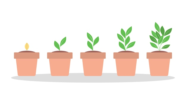 Stages of green plant growth in the red pot.