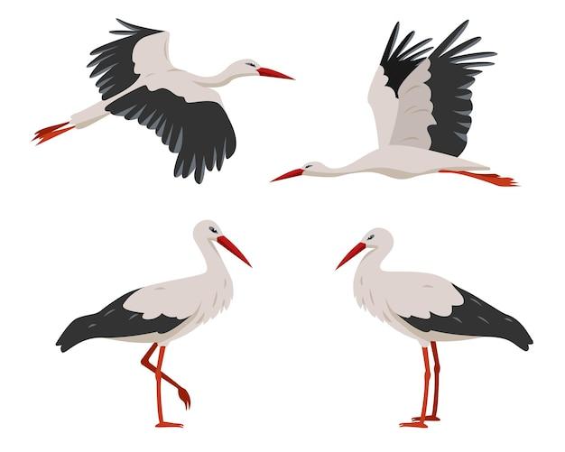Стоящие и летающие аисты птицы серые и белые аисты в разных позах, изолированные на белом