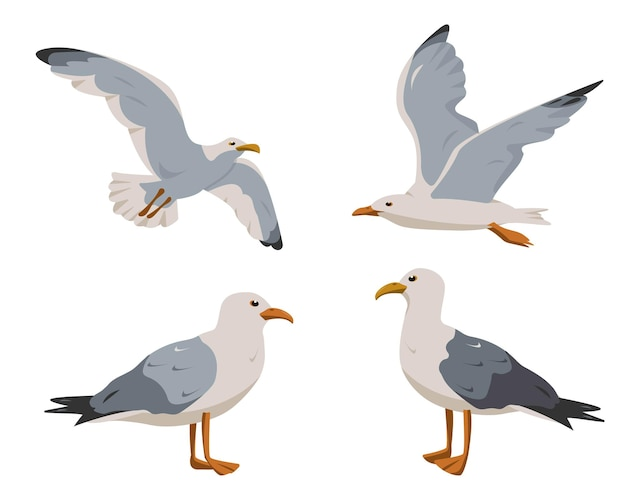 Standing and flying seagulls  in different poses isolated on white background
