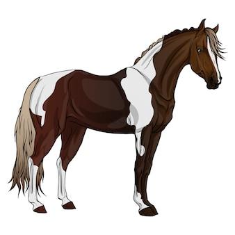 立っている馬。まだらの色。
