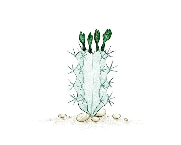 꽃이 있는 stenocereus 선인장 정원 장식을 위한 날카로운 가시가 있는 다육 식물