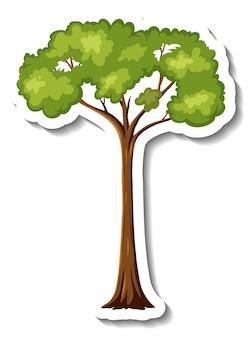 Adesivo albero della foresta pluviale su sfondo bianco