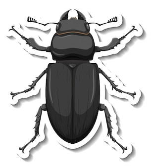 A sticker template with top view of a beetle isolated