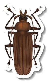 Un modello di adesivo con vista dall'alto di uno scarabeo maggiolino isolato