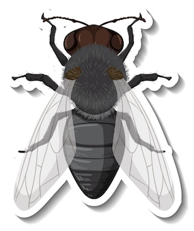 A sticker template with top view of fly isolated