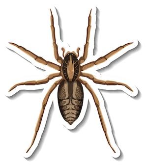 Un modello di adesivo con vista dall'alto di un ragno isolato