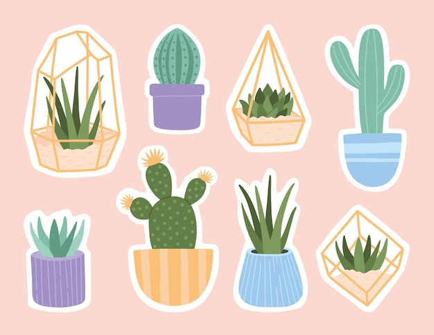Stickers set of succulent in pots and glass terrariums