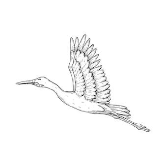 A stork in flight