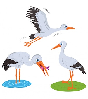 Stork illustration