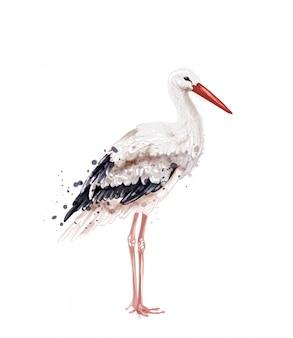 Stork watercolor
