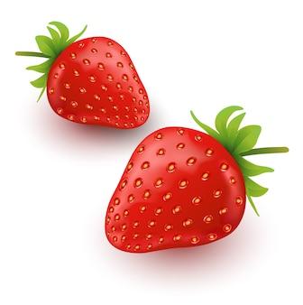 Strawberry fruit illustrations