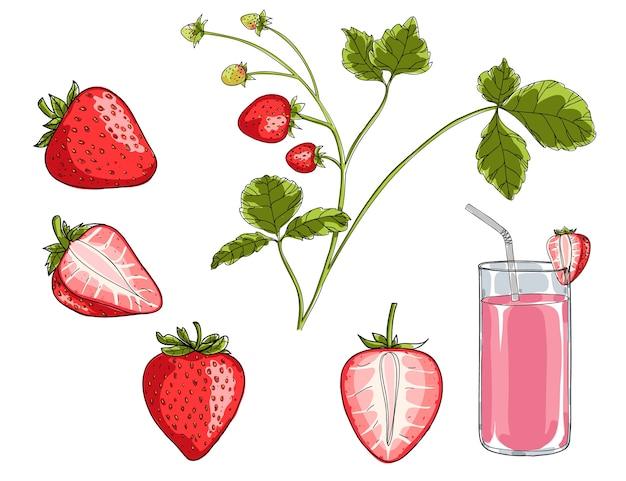 Strawberry plant hand drawn vector set