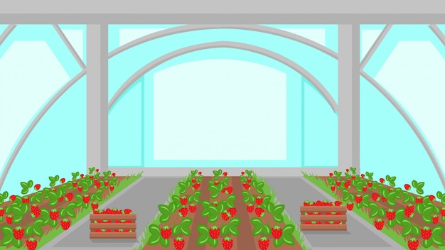 Strawberry plantation in greenhouse illustration