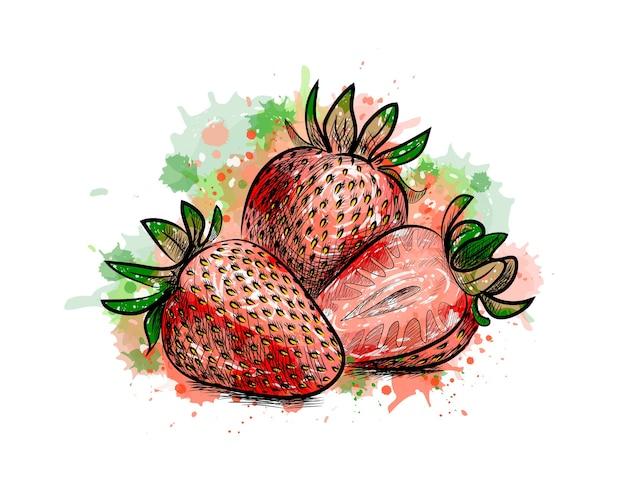 イチゴ。水彩のスプラッシュから甘い果実、手描きのスケッチ。塗料のイラスト