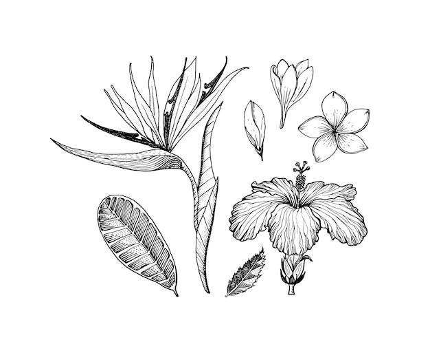 Strelitziahibiscusプルメリア顕花植物熱帯またはエキゾチックな葉と葉のヴィンテージシダ