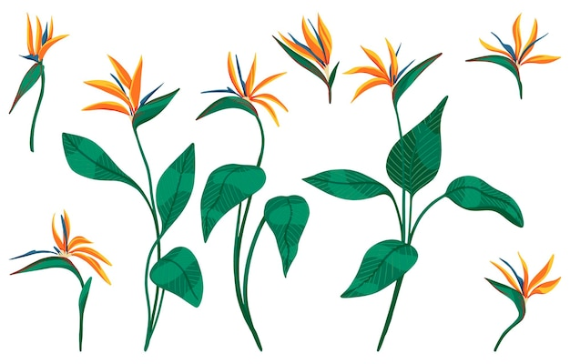 Strelitzia reginae tropical flower set. collection of exotic plants. hand drawn vector illustration. botanical cliparts isolated on white. bright elements for design.