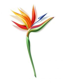 Strelizia reginae realistic flower in 3d
