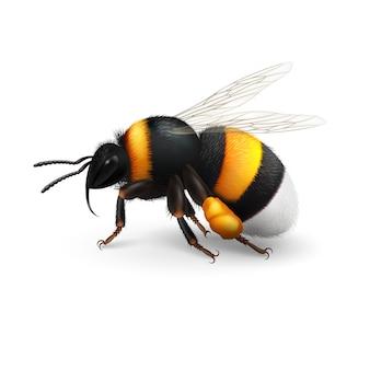 Stripe bumblebee