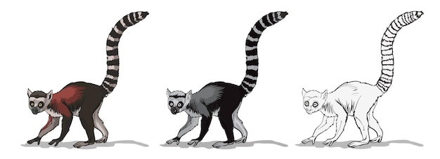 매우 긴 꼬리를 가진 원숭이 동물을 가진 줄무늬 꼬리 원숭이 또는 여우 원숭이