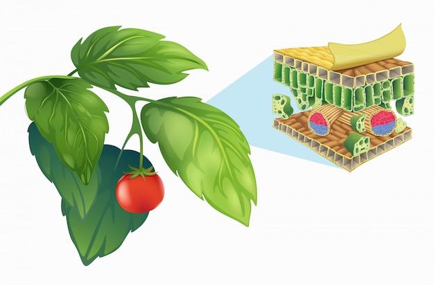 잎의 구조