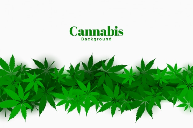 Stylish cannabis background with marijuana leaves design