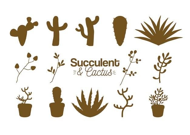 多肉植物とサボテンの砂漠植物