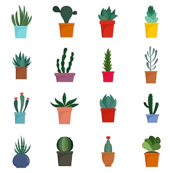 Succulent and cactus flowers icons set