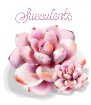 Succulent flower in watercolor