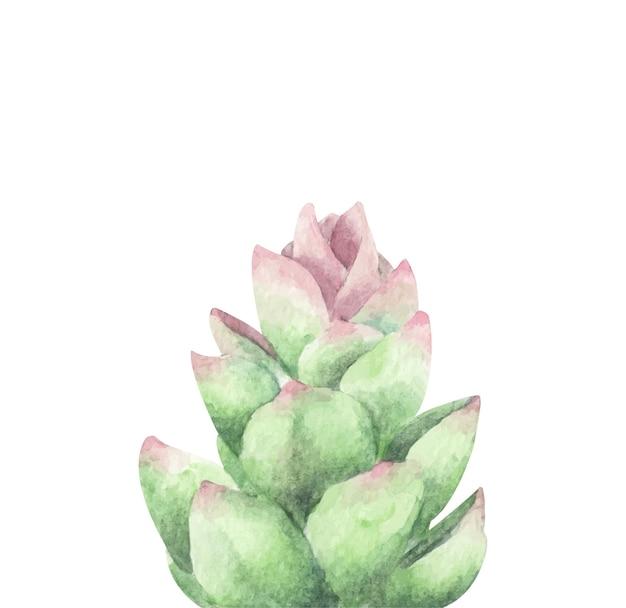 즙이 많은, 녹색. 수채화 그림.