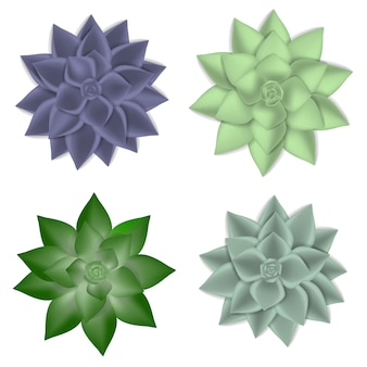 Succulent icons set, realistic style