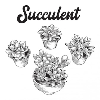 Суккулент линии эскиз иллюстрации набор