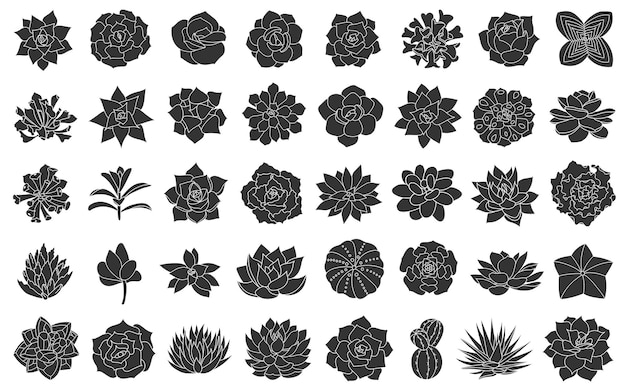 즙이 많은 식물 벡터 일러스트 레이 션 실루엣 echeveria 사막 꽃 손으로 그린에서 설정