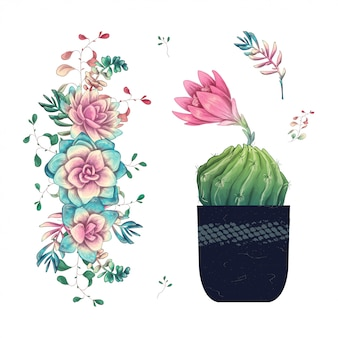 Succulents. cacti hand drawn on a white background